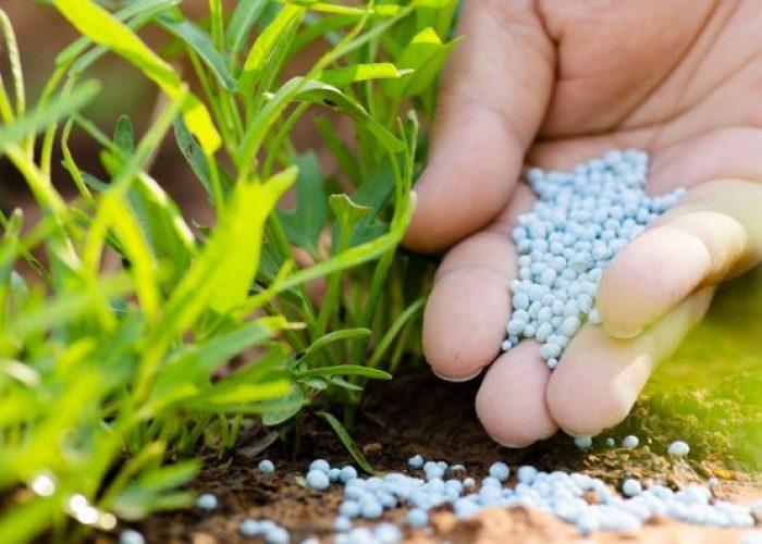 El Fertilizante Apropiado, en el Momento Justo, Colocado en el Lugar Correcto y a la Dosis Exacta.