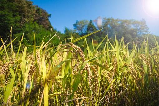 FAO: La Agricultura en el contexto de la Población Mundial y Seguridad Alimentaria