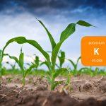 Importancia del Potasio en la Nutrición Vegetal